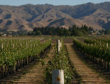 Cloudy Bay, le vin des antipodes