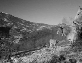 Lactalium : la vodka des montagnes