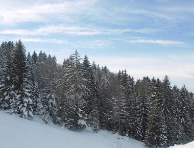 Survie par -10° dans le Jura