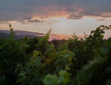 Le phénomène Egiategia, le vin élevé sous la mer