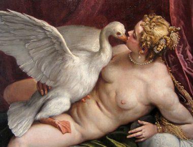 Léda et le cygne, des amours animales