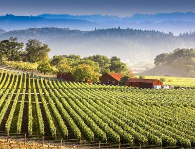 Californication ! Six vins californiens pour l'été