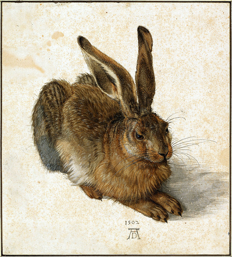 Dürer-Hare