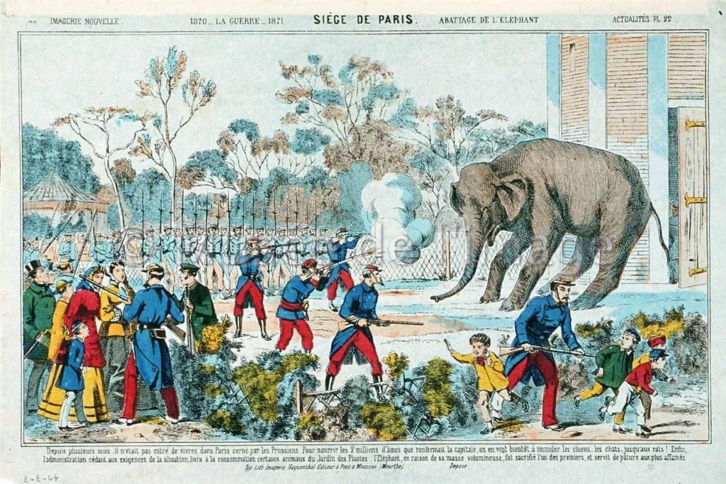 abattage-elephant