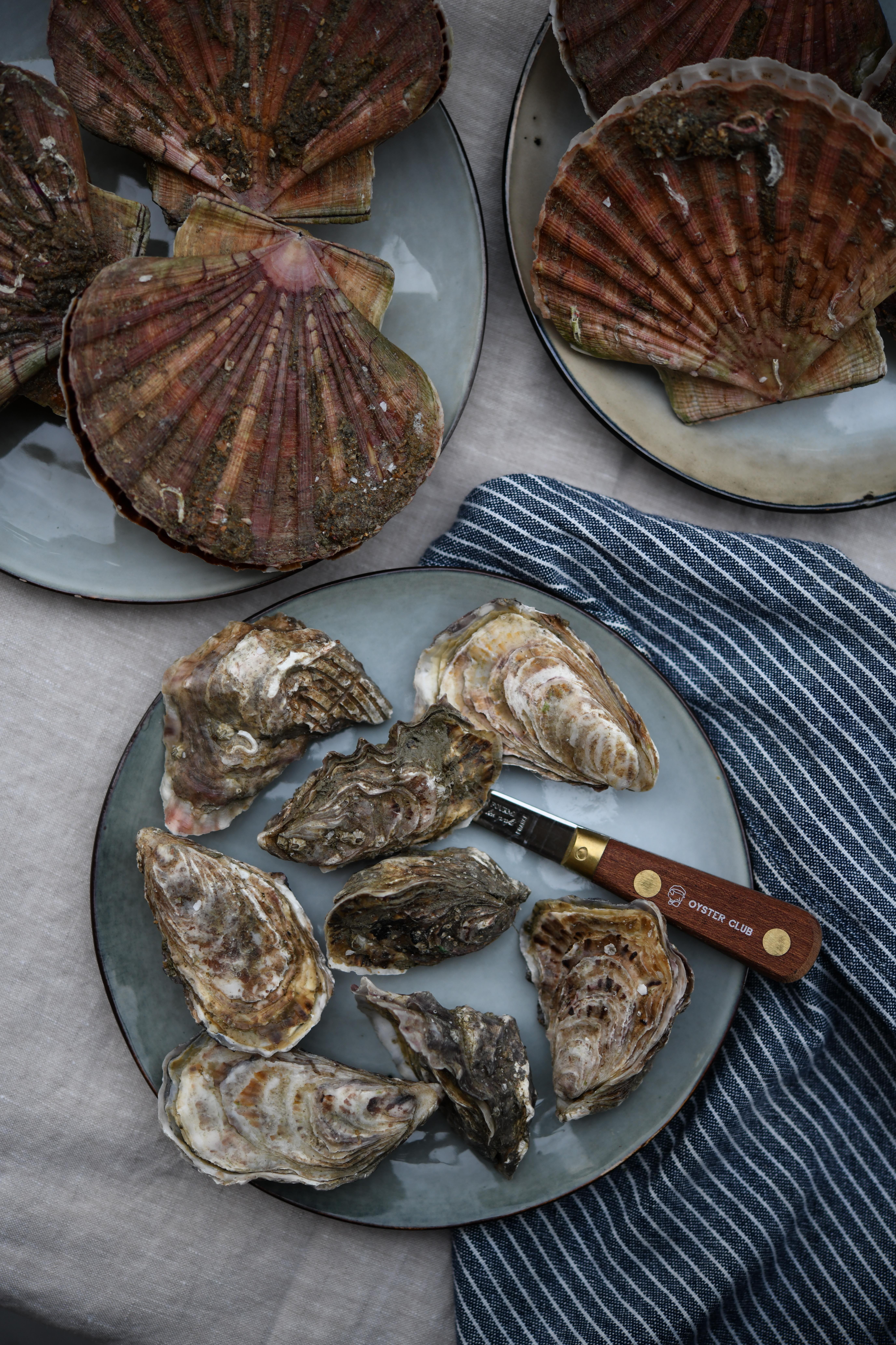 oysterclub