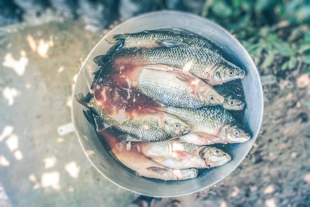 poissons-bouillabaisse