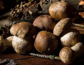Tous à la cueillette! Les saisons secrètes des champignons