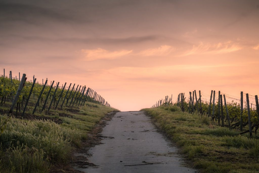 vignes-bourgogne-les-hardis
