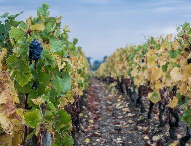 Dans les coulisses de la vente des vins des Hospices de Beaune