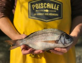 Casiers Poiscaille