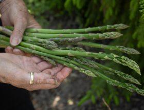 Quels aliments cuisiner entre deux saisons?