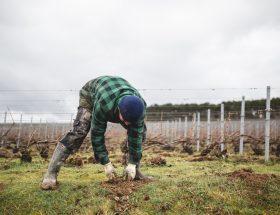 Environnement : à la conquête du champagne écologique