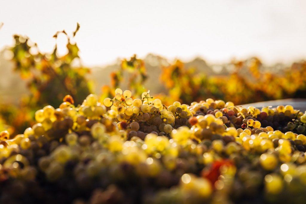 grange-des-peres-vins-les-hardis-3